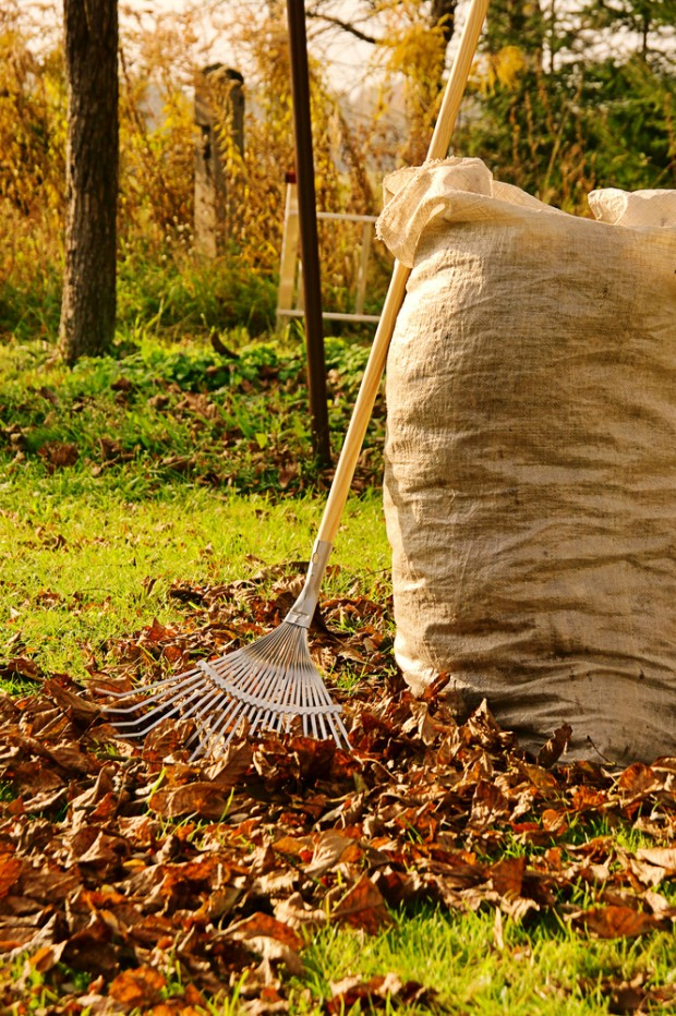 Preparing Your Lawn For Spring