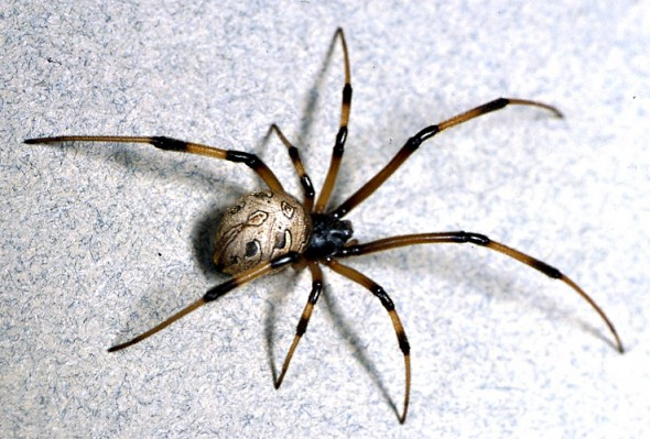 5 Steps To Helping Your Child Overcome Their Fear Of Spiders