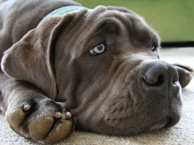 How To Help Your Rescue Dog Adapt To Life In Your Home