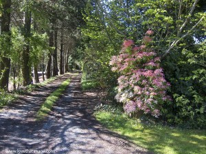 Gussying Up Or Camouflaging An Overbearing, Straight Driveway
