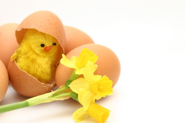 How To Accommodate All Your Easter Holiday Guests Under One Roof