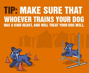 What You Need To Know About Dog Training