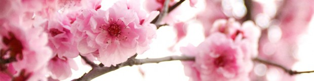 Choosing The Freshness and Fragrance Of Online Flower Delivery
