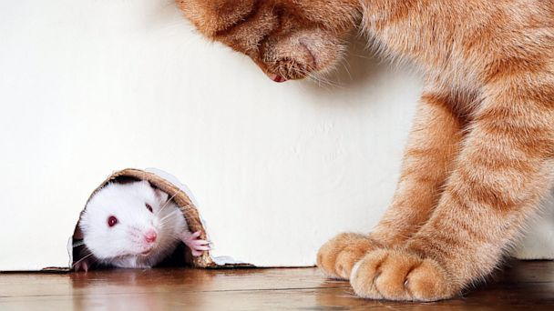 There's A Mouse In My House – What Am I Going To Do?