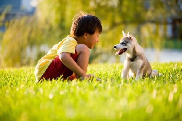 Tips For Helping A Shy Dog Adjust To Life With Your Family